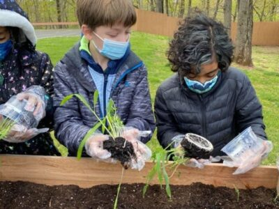 Science units on Planting and Insects